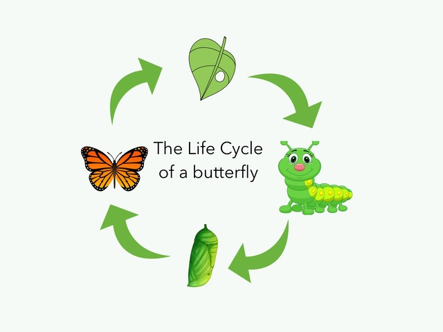 Life Cycle Of A Butterfly  by Mara Carpenter