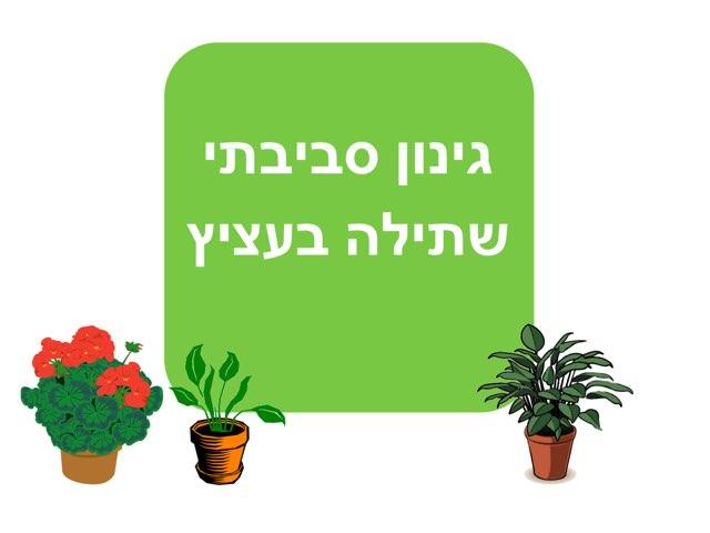 שתילה בעציץ-מילים by יעל קובו