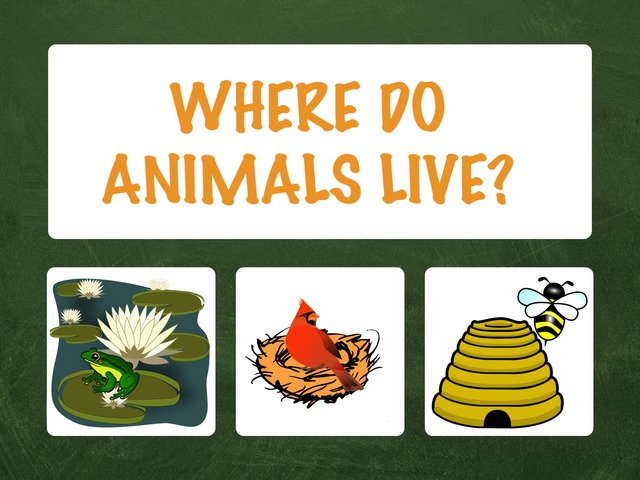 Where Do Animals Live Games Online For Kids In Preschool By Hadi Oyna I live in santiponce where do you live? games online for kids in preschool by