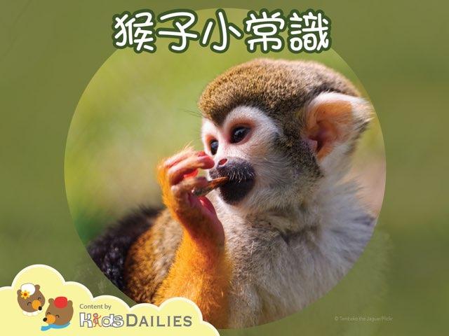 猴子 by Kids Dailies