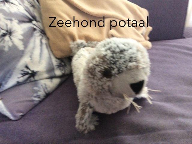 ZeeHond Portaal by Melle Melle
