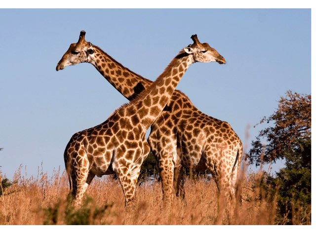 Parts De La Girafa by M Jose Perez