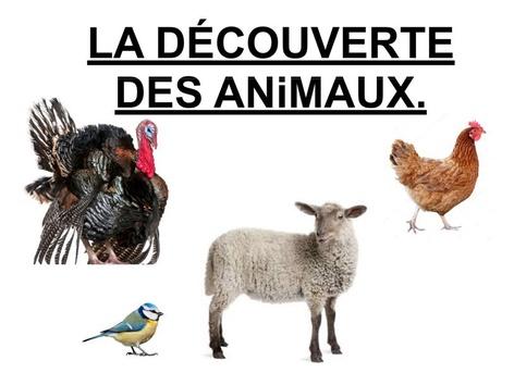 Découverte Des ANiMAUX 4. by Valerie Escalpade