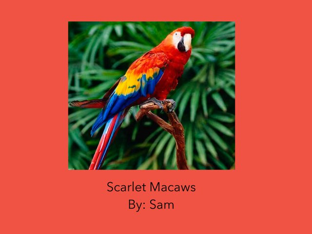 Scarlet Macaws  by Diana Coyne