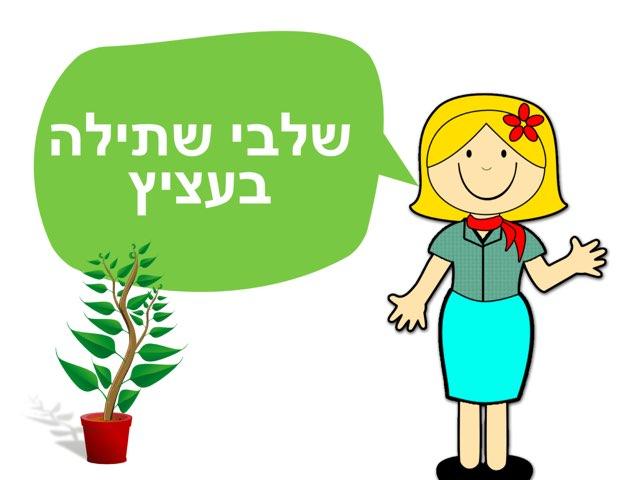 שלבי שתילה בעציץ by יעל קובו