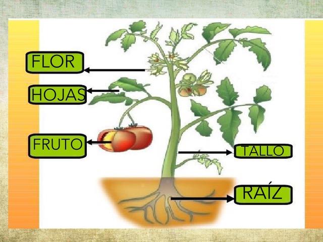 Plantas  by Alicia Cárdenas Vicente