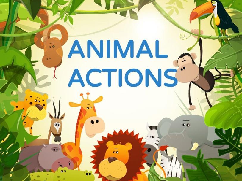ANIMAL ACTIONS- 4YEARS by VIR ZEG