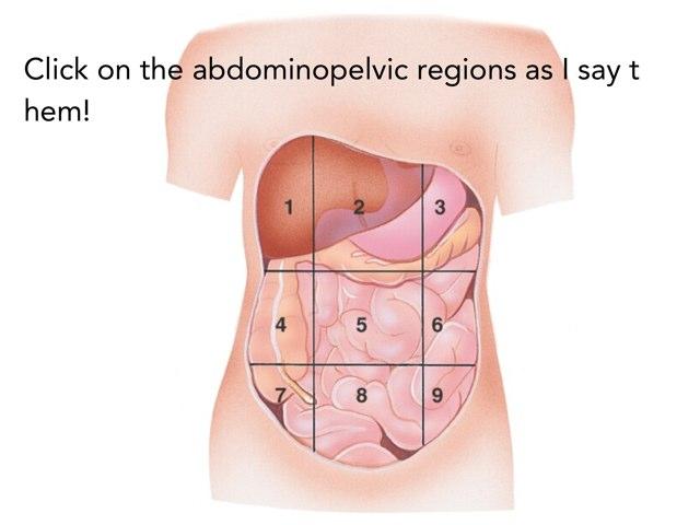 Abdominopelvic Regions by Jasmine Kouch