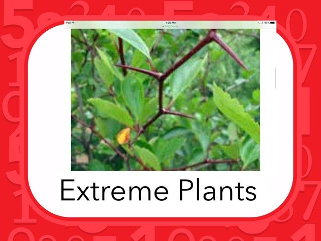 Aiden Plants by Hulstrom 1st Grade