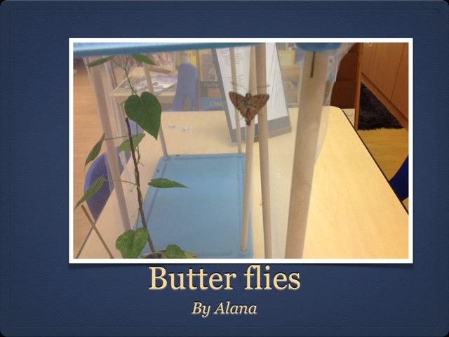 Alana Butterflies by P302 SAS