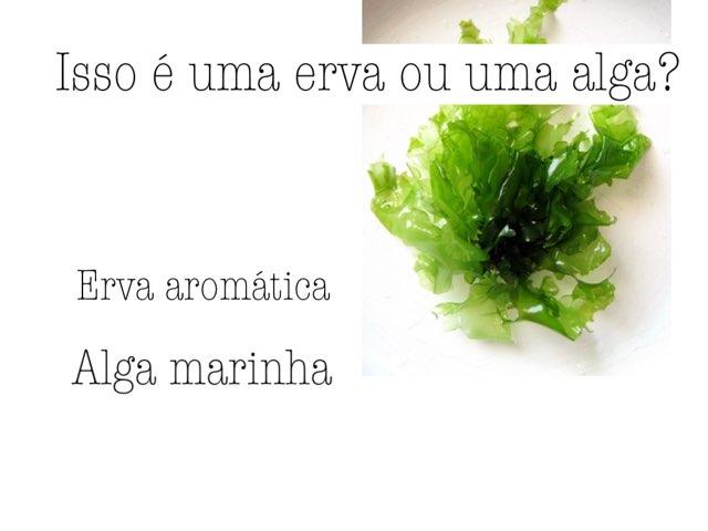Alga Marinha by Escola lápis de cor