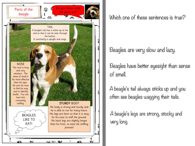 All About Beagles - Reading Comprehension by Mrs Lightfoot