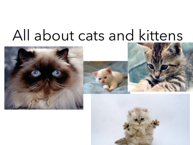 All About Cats And Kittens by Jessica Watne