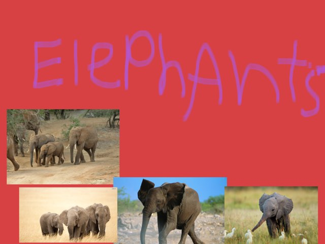 All About Elephants by Jessica Watne