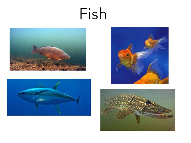 All About Fish, Amphibians, Reptiles, Birds And Mammals by David Andrews