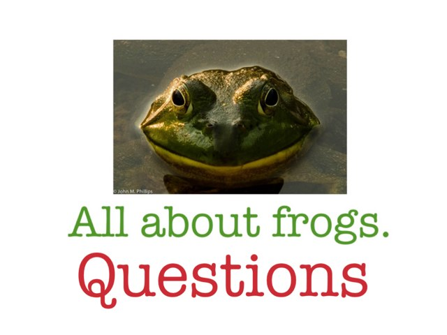 All About Frogs, Questions by Theresa Dengler