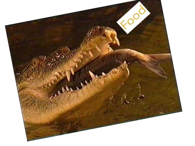 Alligators by Keegan scelia