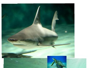 turtle shark by Oof head