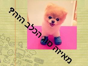 מאיזה סוג הכלב by yinon amar