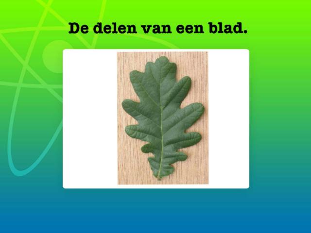 Delen blad test by Heleen Benoot