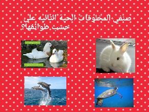 Game 5 by Ahmed AL Gobishe