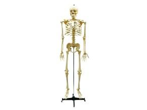 O esqueleto by Lucía Rodríguez