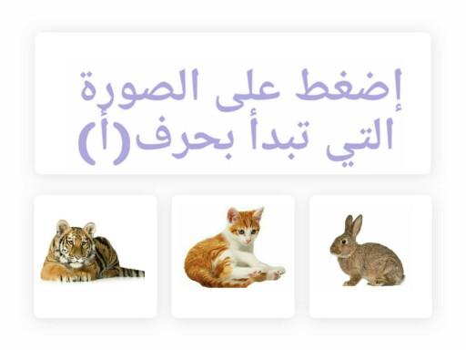 Arabic alphabets by Amal Nasser