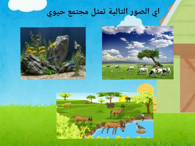 رابع ابتدائي by Amani Alotaibi