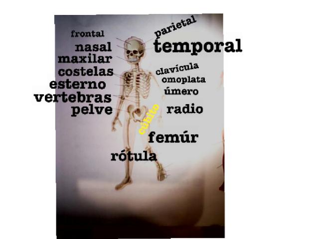 puzzle esqueleto by Lucía Rodríguez