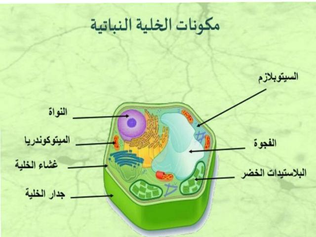 خلية النباتية  by تقى محمد ست اليمن