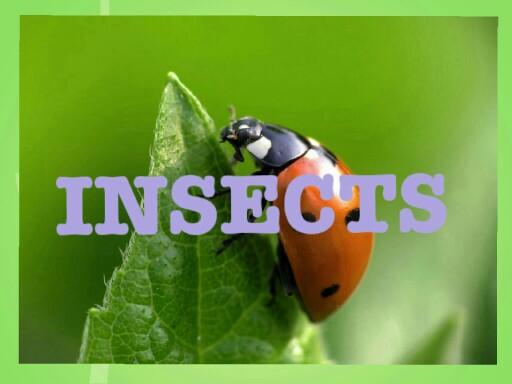 комахи by Andrey Nikolayenko