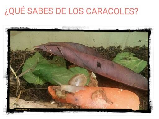 LOS CARACOLES by samuel ruiz