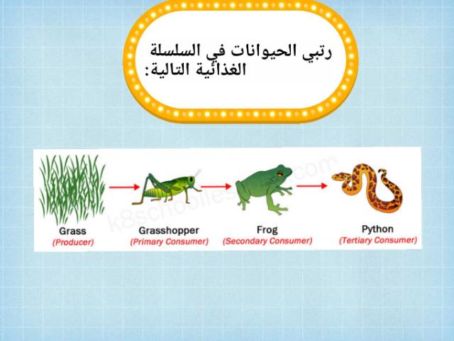 السلسلة الغذائية by teacher Aseel