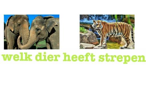 de kinder quiz by arnage van der burgh