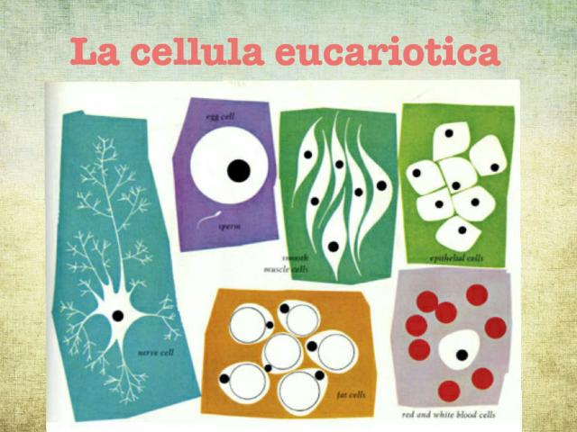 La cellu by Grazia Paladino