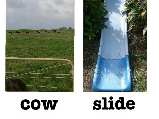 cow and slide by Karen Khayat