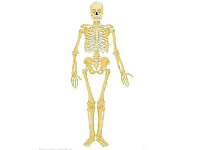 esqueleto humano by Miguel Soto Estevez