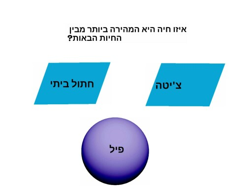 עעע5 עעעעע יננמ by Evyatar Grinfeld
