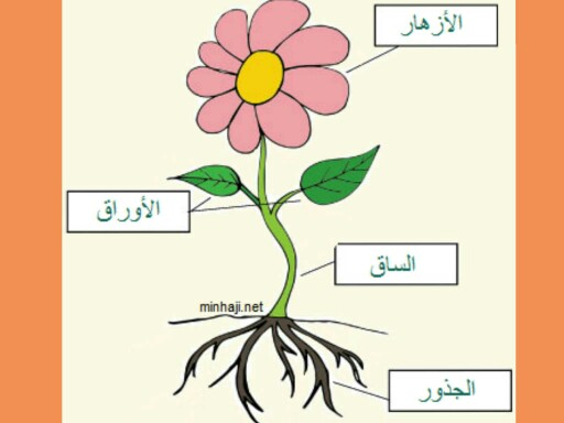 وظائف أجزاء النبات by عالمة في ملاهي العلوم