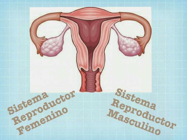 Sistema Reproductor Femenino by Marcia Quintana