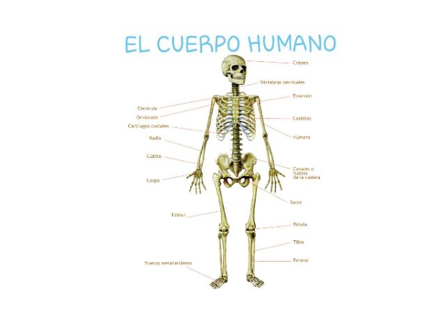 Los huesos by Áfrika D
