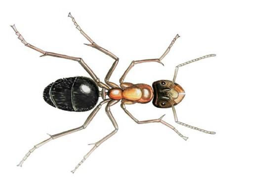 le corps des insectes by gones Arthropologia