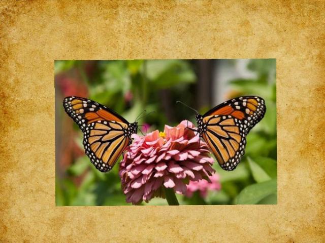 نداء الفراشة by alialshezawi