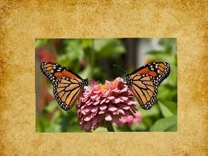 نداء الفراشة by TinyTap creator