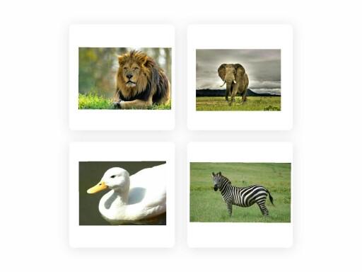 حيوانات by Nour Taweel
