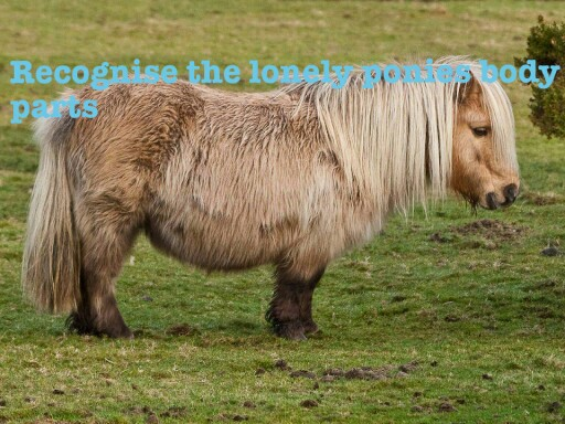 recognise the lonely ponies body parts by george dale