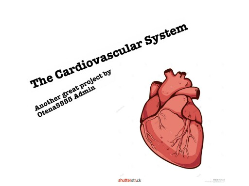 The Cardiovascular System by Otena5555 Admin