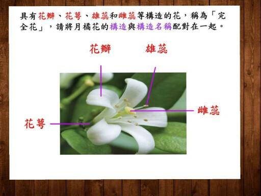 配合國小五年級植物單元教學使用 by 16號 蔡蜜蜜