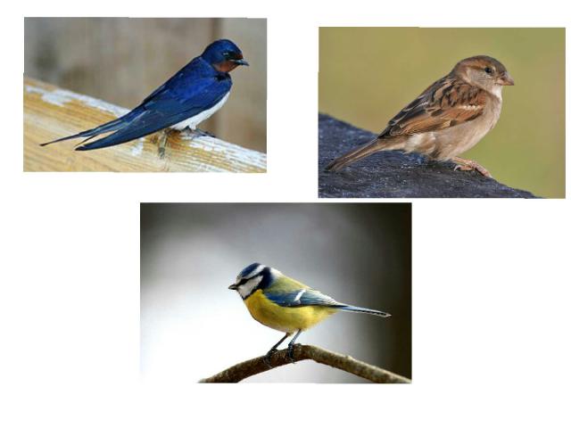 Žaidimas apie paukščius  by Alma Siaulenskyte