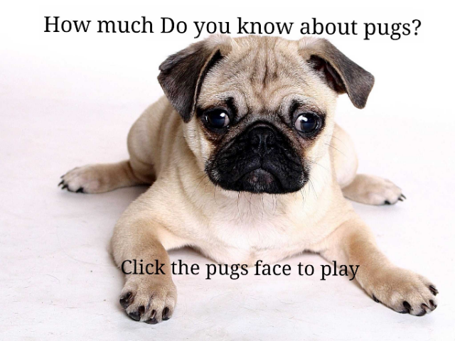 How much do you know about pugs by Michael Maddox